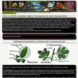 Identify Australian Native Tree Species by Leaf Characteristics, Tree Identification Pictures