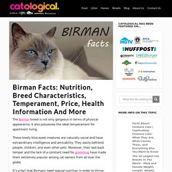 Birman Facts: Nutrition, Breed Characteristics, Temperament, Price, Health Information And More