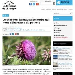 JOURNAL DE L ENERGIE 04/06/15 Le chardon, la mauvaise herbe qui nous débarrasse du pétrole