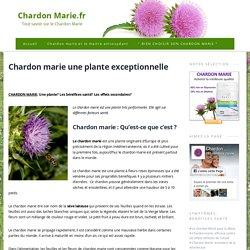 Chardon marie une plante exceptionnelle