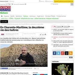 En Charente-Maritime, la deuxième vie des huîtres