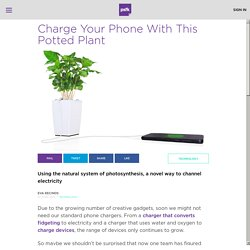 Charge Your Phone With This Potted Plant