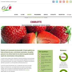 Charlotte - Ciref - Création variétale fraises et fruits rouges
