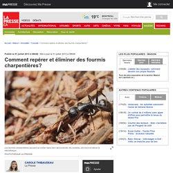 Comment repérer et éliminer des fourmis charpentières?