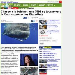 Chasse à la baleine : une ONG se tourne vers la Cour suprême des Etats-Unis