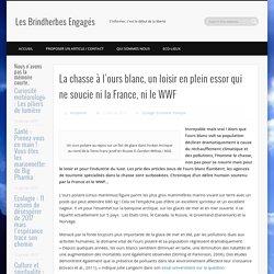 La chasse à l'ours blanc, un loisir en plein essor qui ne soucie ni la France, ni le WWF