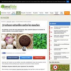 Chasser les mouches : 10 astuces naturelles