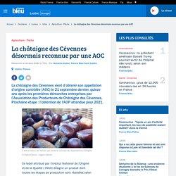 FRANCE BLEU 04/10/20 La châtaigne des Cévennes désormais reconnue par une AOC