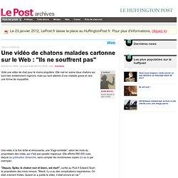 """Une vidéo de chatons malades cartonne sur le Web : """"Ils ne souffrent pas"""" - LePost.fr"""