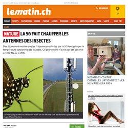 Nature: La 5G fait chauffer les antennes des insectes