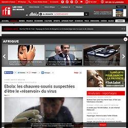 RFI 19/04/14 Ebola: les chauves-souris suspectées d'être le «réservoir» du virus