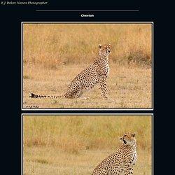 Cheetah Page