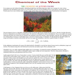 The Chemistry of Autumn Colors