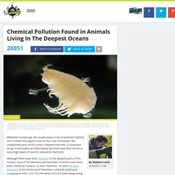 Chemical Pollution Found in Animals Living In The Deepest Oceans