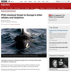 PCB chemical threat to Europe's killer whales and dolphins
