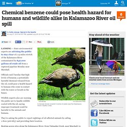 MLIVE 27/07/10 Chemical benzene could pose health hazard for humans and wildlife alike in Kalamazoo River oil spill