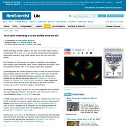 Your brain chemistry existed before animals did - life - 01 September 2011