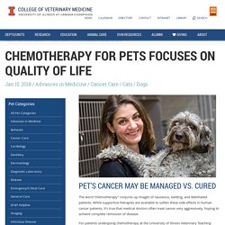 Chemotherapy for Pets Aims for Quality Life - Veterinary Medicine at Illinois