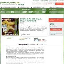 Bactérie contre les chenilles : Bacillus thuringiensis