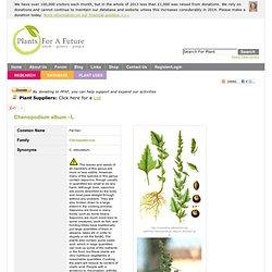 Chenopodium album Fat Hen PFAF Plant Database