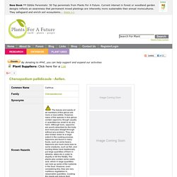 Chenopodium pallidicaule Cañihua PFAF Plant Database
