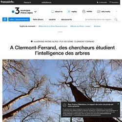 A Clermont-Ferrand, des chercheurs étudient l'intelligence des arbres