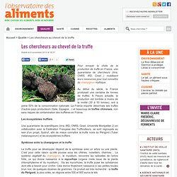 OBSERVATOIRE DES ALIMENTS 06/11/13 Les chercheurs au chevet de la truffe