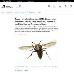 Tours : les chercheurs de l'IRBI découvrent comment lutter, sans pesticide, contre la prolifération du frelon asiatique