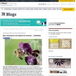 Des chercheurs ont rajeuni le cerveau… d'abeilles