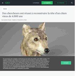 Des chercheurs ont réussi à reconstruire la tête d'un chien vieux de 4.000 ans