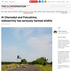 At Chernobyl and Fukushima, radioactivity has seriously harmed wildlife