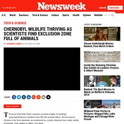 Scientists Find Chernobyl Full of Thriving Animals