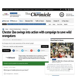 Chester Zoo swings into action with campaign to save wild orangutans
