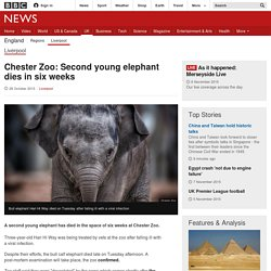 Chester Zoo: Second young elephant dies in six weeks