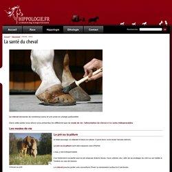 La santé du cheval, les soins, l'entretien - Hippologie.fr