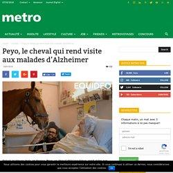 Peyo, le cheval qui rend visite aux malades d'Alzheimer