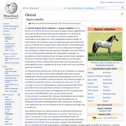 Quelques infos pour vous aider sur les chevaux. <3