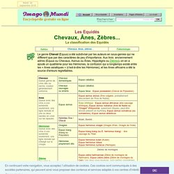 Chevaux, ânes, zèbres : la classification des Equidés.