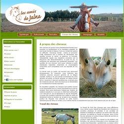 chevaux et poneys : travail en équithérapie