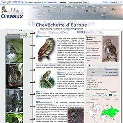 Chevêchette d'Europe - Glaucidium passerinum