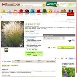 Cheveux d'anges : achat/vente plantes vivaces en ligne chez Willemse
