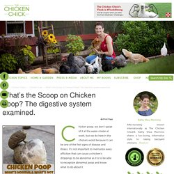 What's the Scoop on Chicken Poop? The digestive system examined.