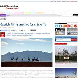 Ostrich farms are not for chickens