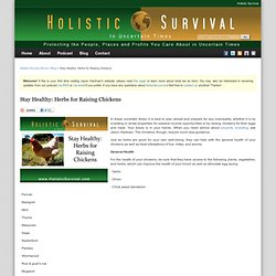 Stay Healthy: Herbs for Raising Chickens - Holistic Survival Show