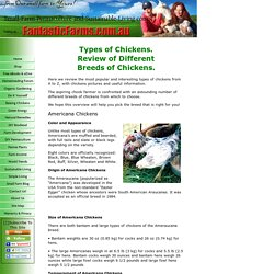 Types of Chickens. A Review of Different Breeds of Chickens.