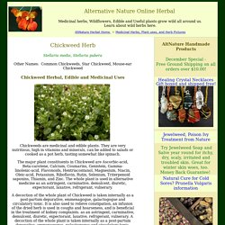 Chickweed Herb Uses and Medicinal Properties