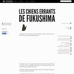 Les chiens errants de Fukushima - davduf