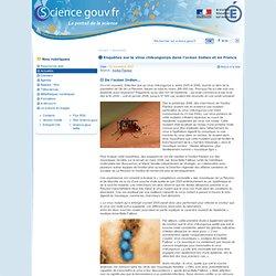 Enquêtes sur le virus chikungunya dans l'océan Indien et en France