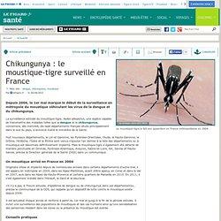 Chikungunya : le moustique-tigre surveillé en France