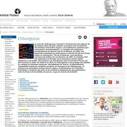 Peste - Symptômes, traitement et recherche chikungunya